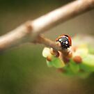 Ladybug on a Lilac Branch by Tamara Brandy