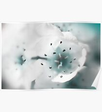 white and blue Poster