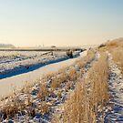 Winter In Purmerbos by Robert Abraham