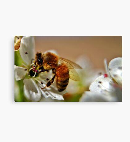 Lone Bee Canvas Print