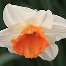 orange middle by anfa77