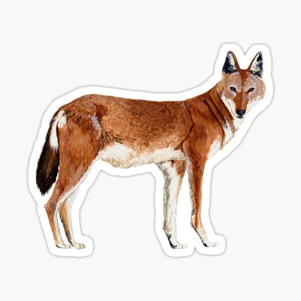 ETHIOPIAN WOLF Pegatina