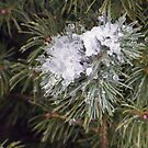 Pine,Snow and Ice by Sandra Lee Woods