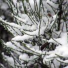 Fantasy Snowfall by Sandra Lee Woods