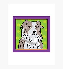 Australian Shepherd Cartoon Photographic Print