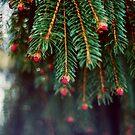 Spruce by EkaterinaLa