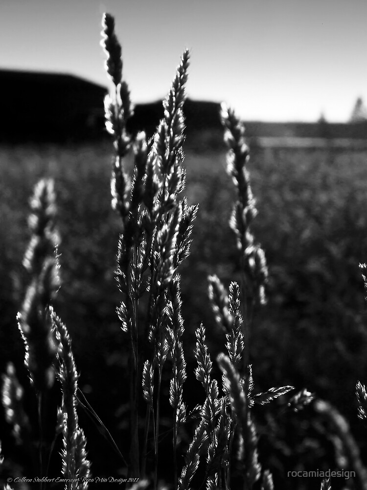 Leaves of Grass by rocamiadesign