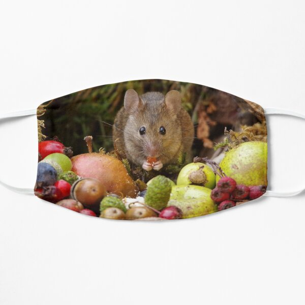 wild house mouse  Mask