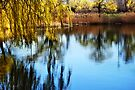 Spring Pond by Elaine Manley