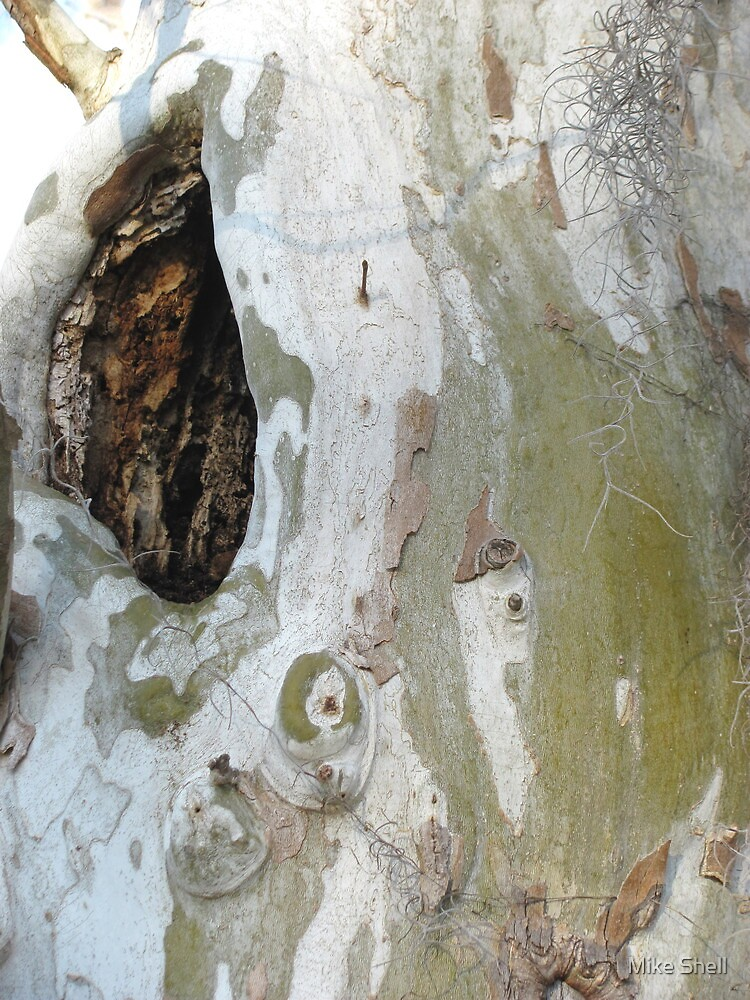 Sycamore wound by Mike Shell