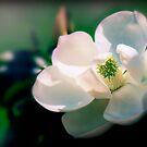 Magnolia by Magaly Burton