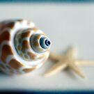Sea Shell & starfish by Magaly Burton