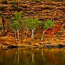 Four Trees - Ross Graham Gorge in Kalbarri by John Pitman