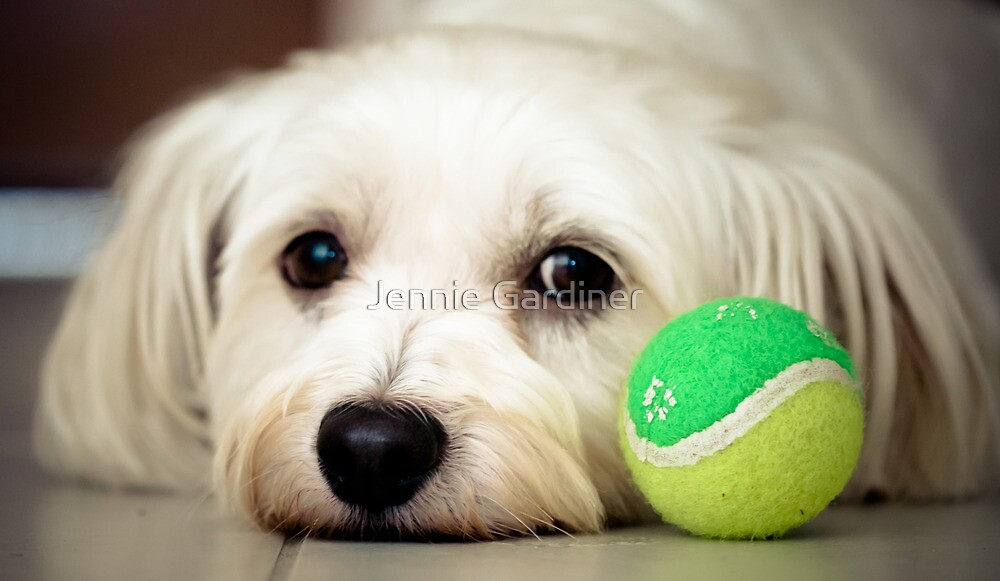 Please Play With Me! by Jennie Gardiner