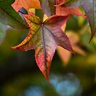 Autumn Leaves by Glenda Williams