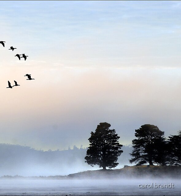 morning mist at dulverton lake by carol brandt
