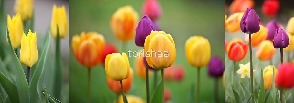 Tulips in the garden  by torishaa