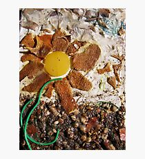 SPRING 1 - SUNSHINE BRINGS SEED INTO LIFE  Photographic Print