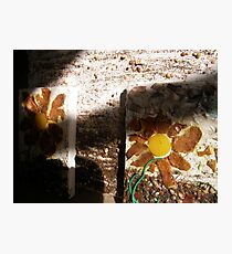 SPRING 20 - TOOLS HELP PLANT'S TO GROW - SHARE KNOWLEDGE - GROW FOOD Photographic Print