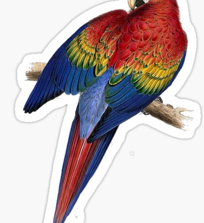 Illustration of A Scarlet Macaw Isolated On White Sticker
