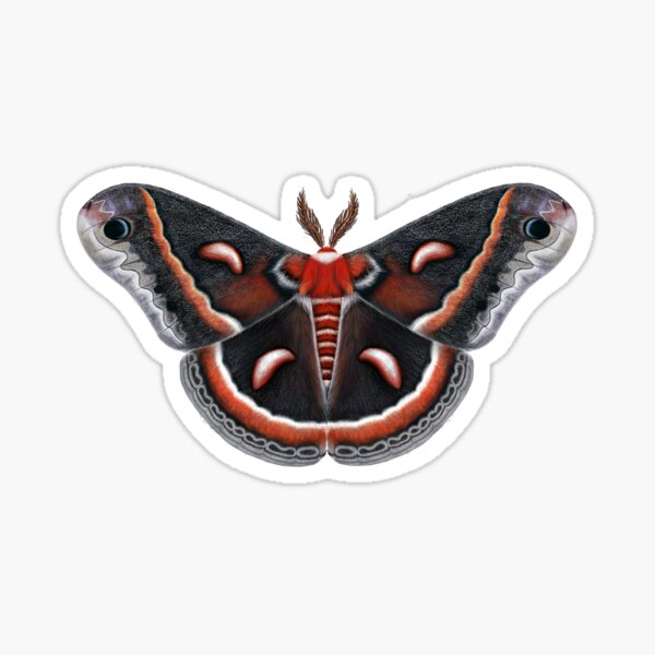 Cecropia Moth Painting Sticker