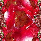 Red tulips I phone 4 by Margherita Bientinesi