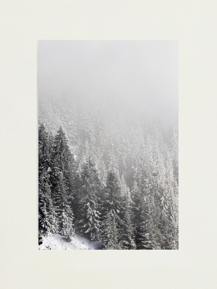 Snowy Spruce Forest Wrapped In Fog Photographic Print By Patriklovrin Redbubble
