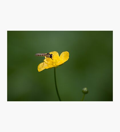 Bug on a yellow flower Photographic Print