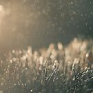 Rain and light by Anete Bauere