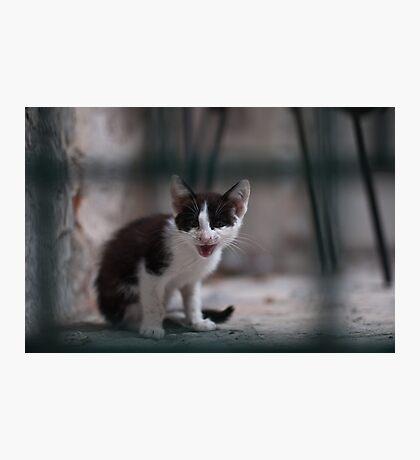 Meow! Photographic Print