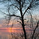 Tree in the Setting Sun by Sandra Fortier
