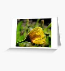 Balancing Act - Slender Stem Bitterweed - Texas Wildflower Greeting Card