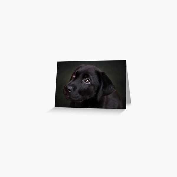 P is for.....Puppy dog eyes Greeting Card