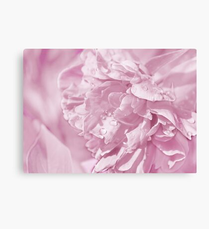 Peony In Pastel Pink Canvas Print