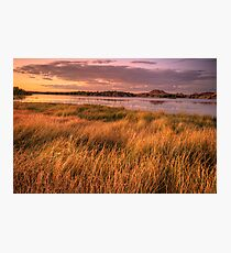 Willow Lake Violet Photographic Print