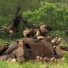 Clean up crew by Explorations Africa Dan MacKenzie