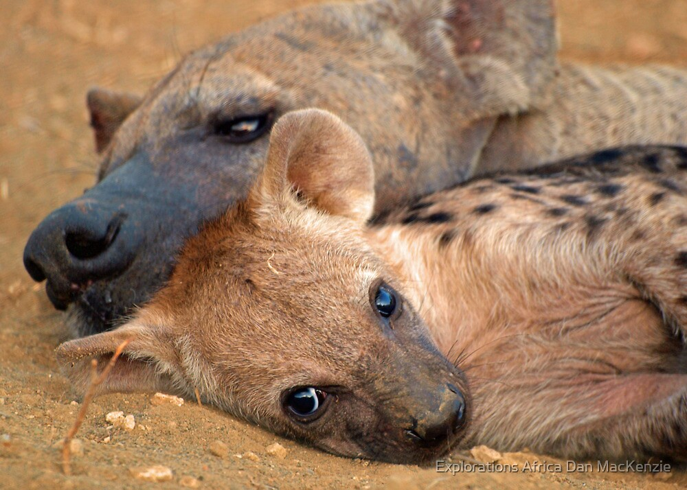 Even ugly can be cute! by Explorations Africa Dan MacKenzie