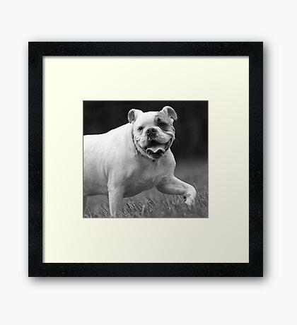 Bully For You! Framed Print