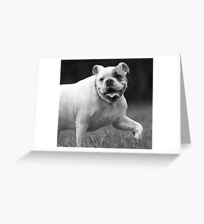 Bully For You! Greeting Card