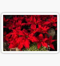 Happy Scarlet Poinsettias Christmas Star Sticker