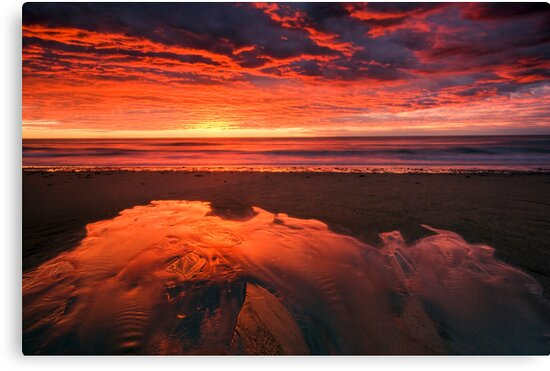 Run to the Sea by Michael Treloar