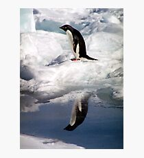 Adelie Penguin in a Reflective Mood Photographic Print