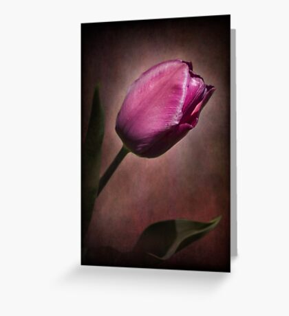Imperial Tulip Greeting Card