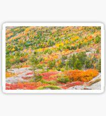 Fall coloor on Cadillac Mountain, Acadia National Park, Maine Sticker