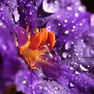 Purple rain by PhotoTamara