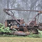 Bull Dozer Dozing!! Mt Wilson NSW Australia by Bev Woodman
