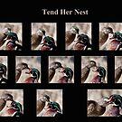 Tend Her Nest by DigitallyStill