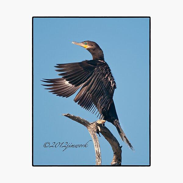 Neotropic Cormorant Yoga Photographic Print