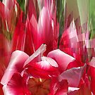 Tulips composition by Margherita Bientinesi