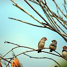 Three in a tree by oddoutlet